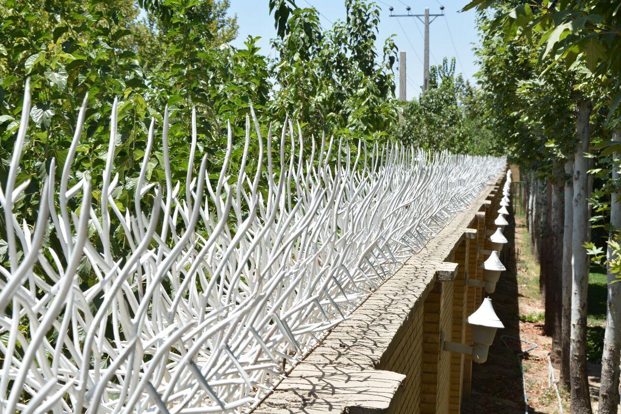 حفاظ شاخ گوزنی , شاخ گوزنی , قیمت حفاظ شاخ گوزنی